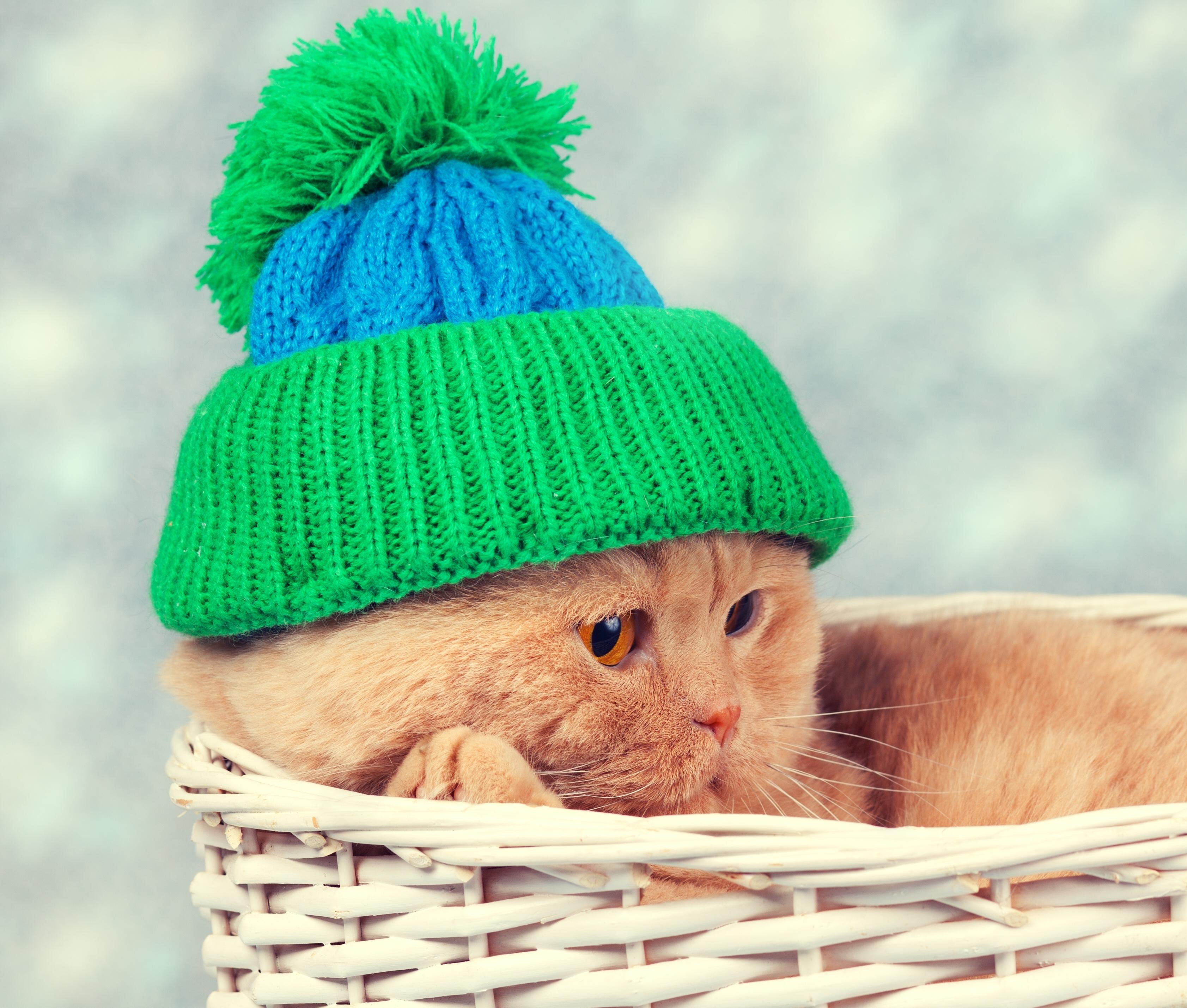 Кот под шапкой  № 3059151 без смс
