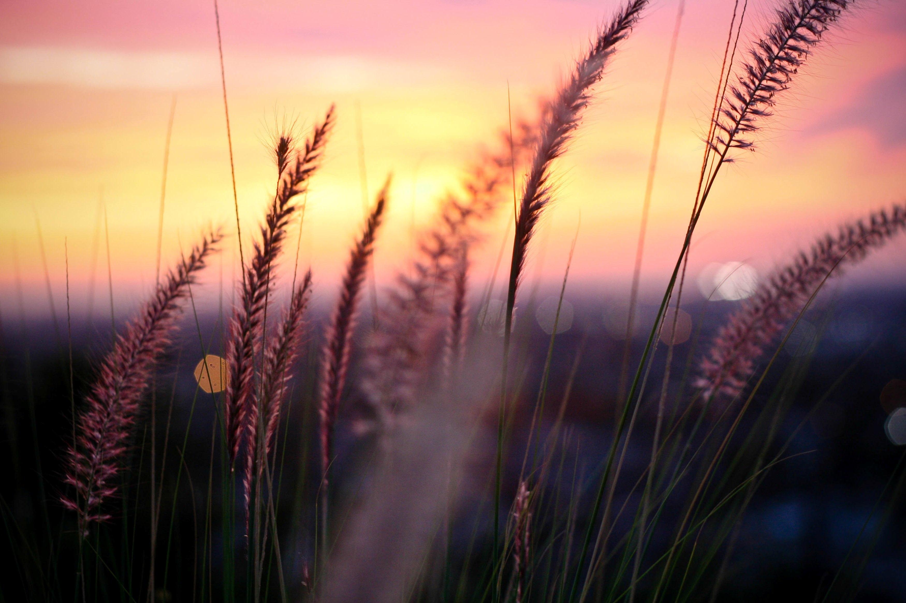 природа цветы трава мельниц восход солнце  № 2556623  скачать