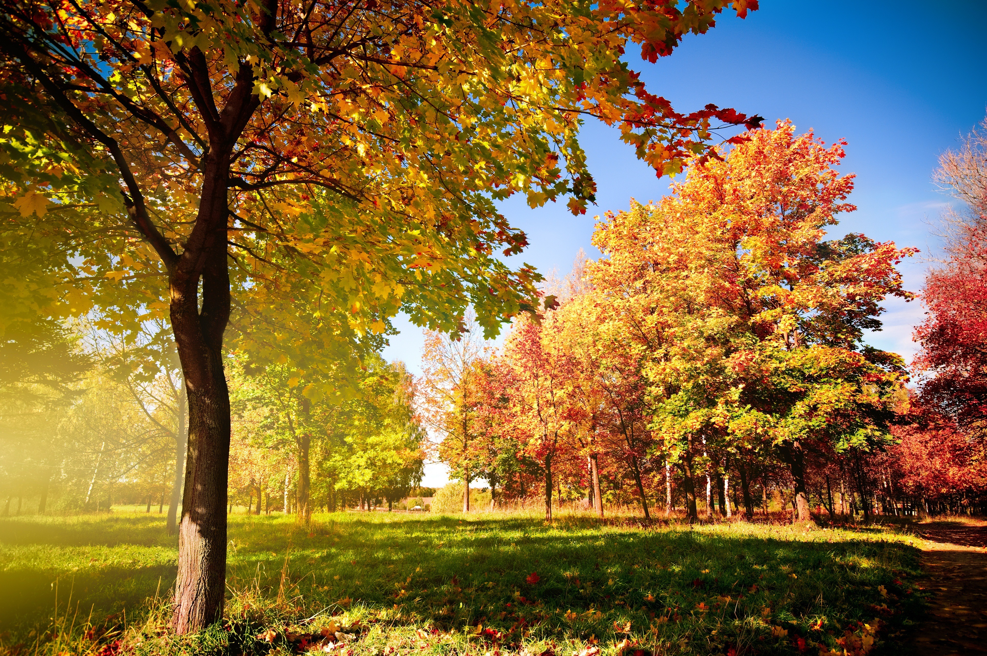 autumn trees osen derevya