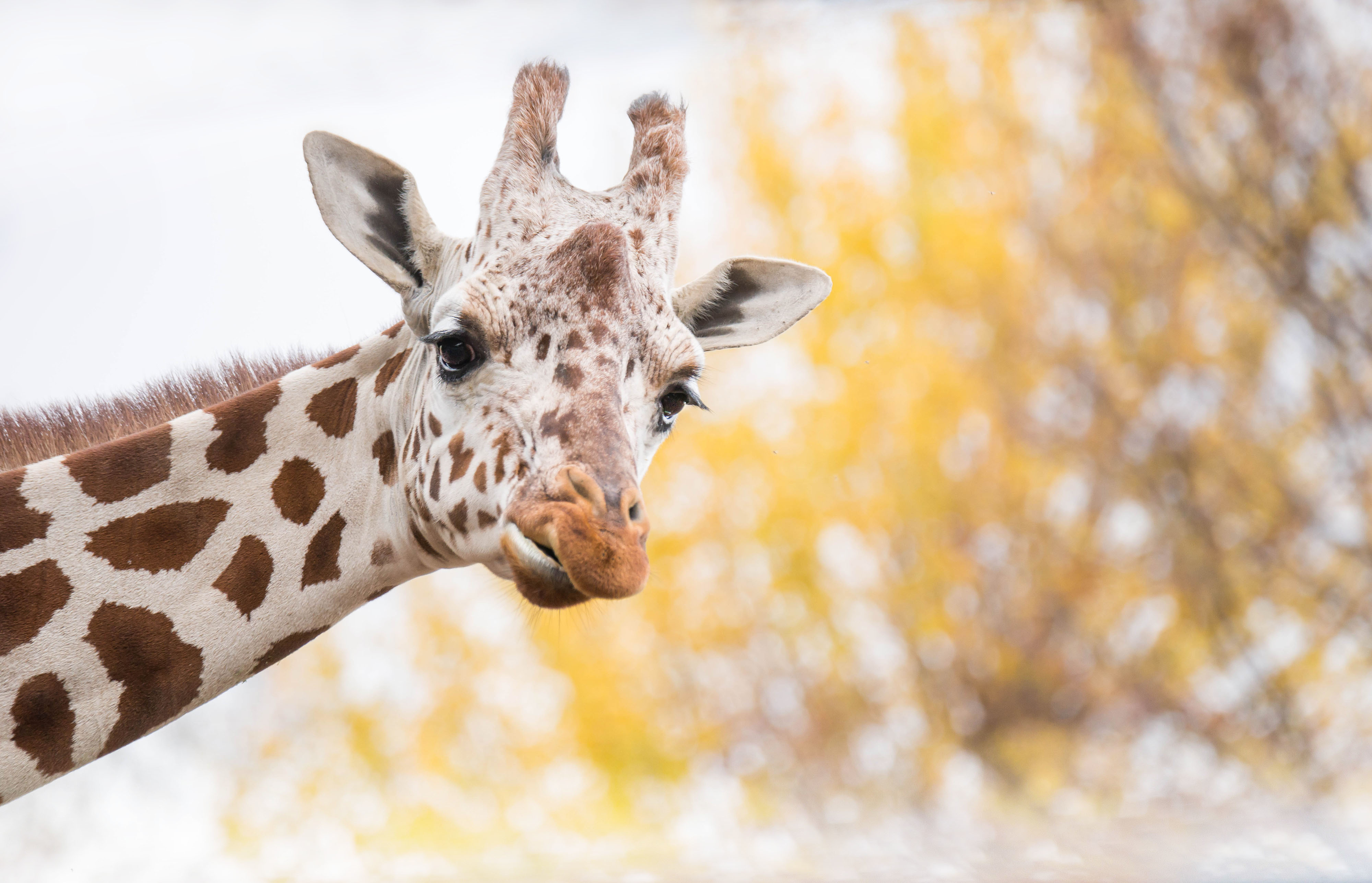 Жираф испугался  № 3895679 загрузить