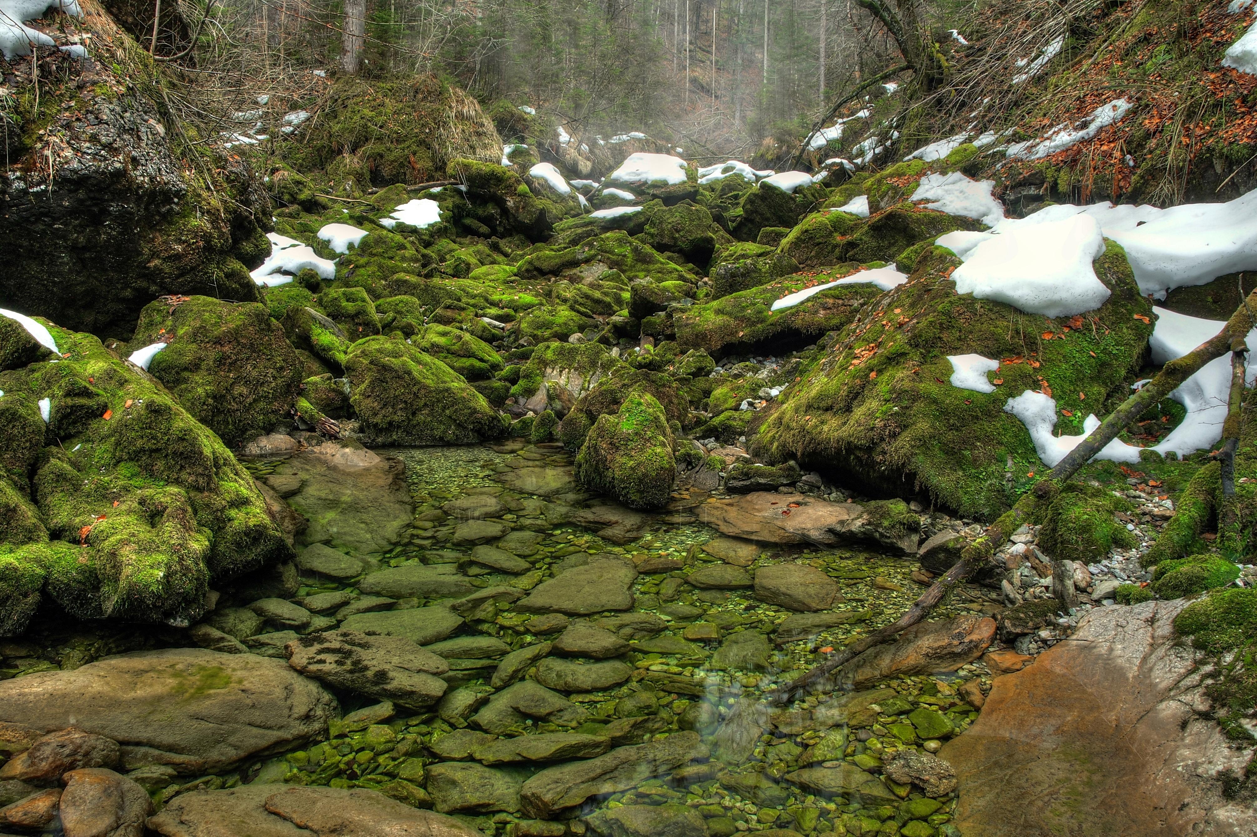 природа вода река трава деревья мох  № 3800919 без смс