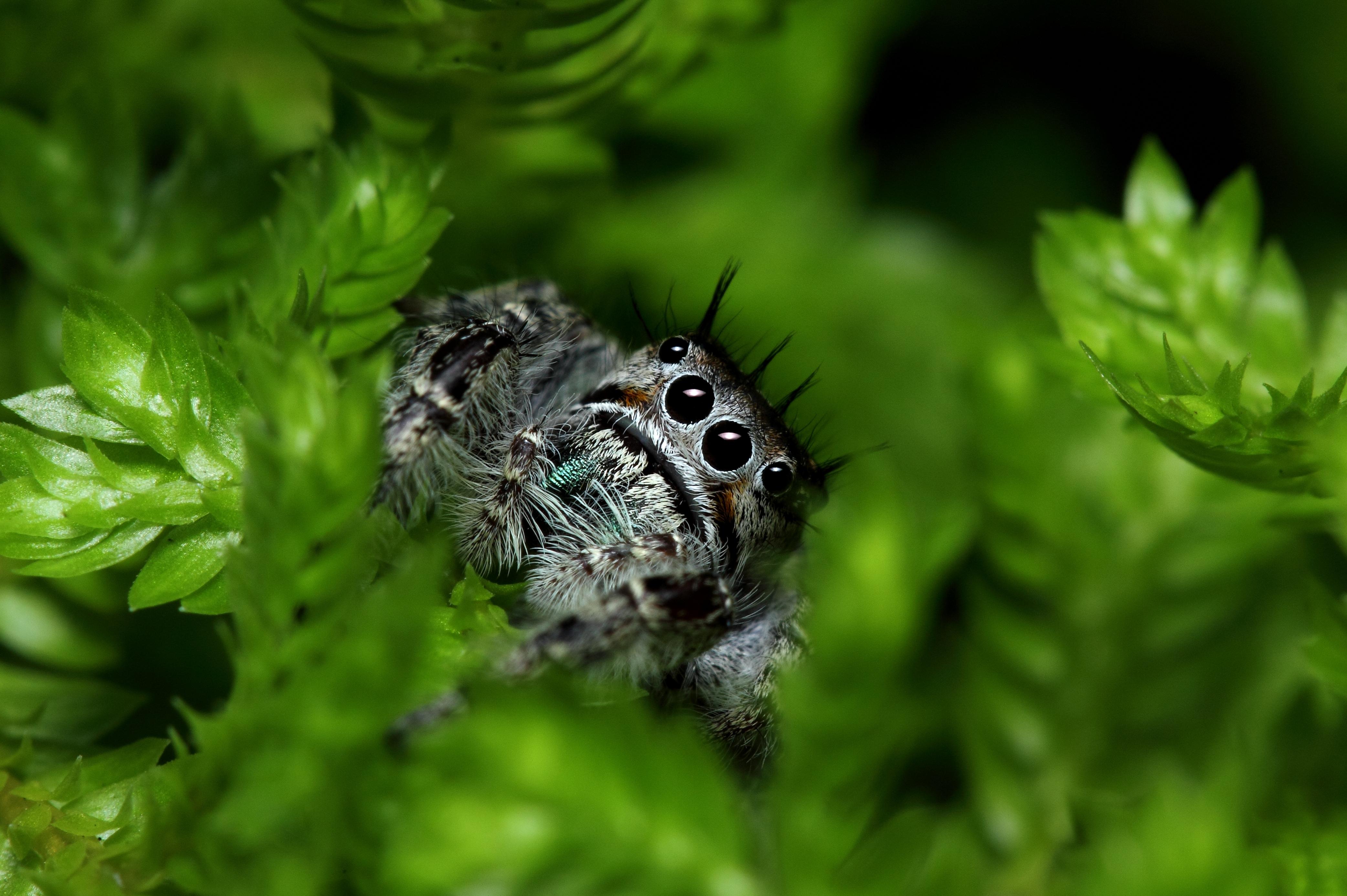 природа животные паук  № 2544234 загрузить