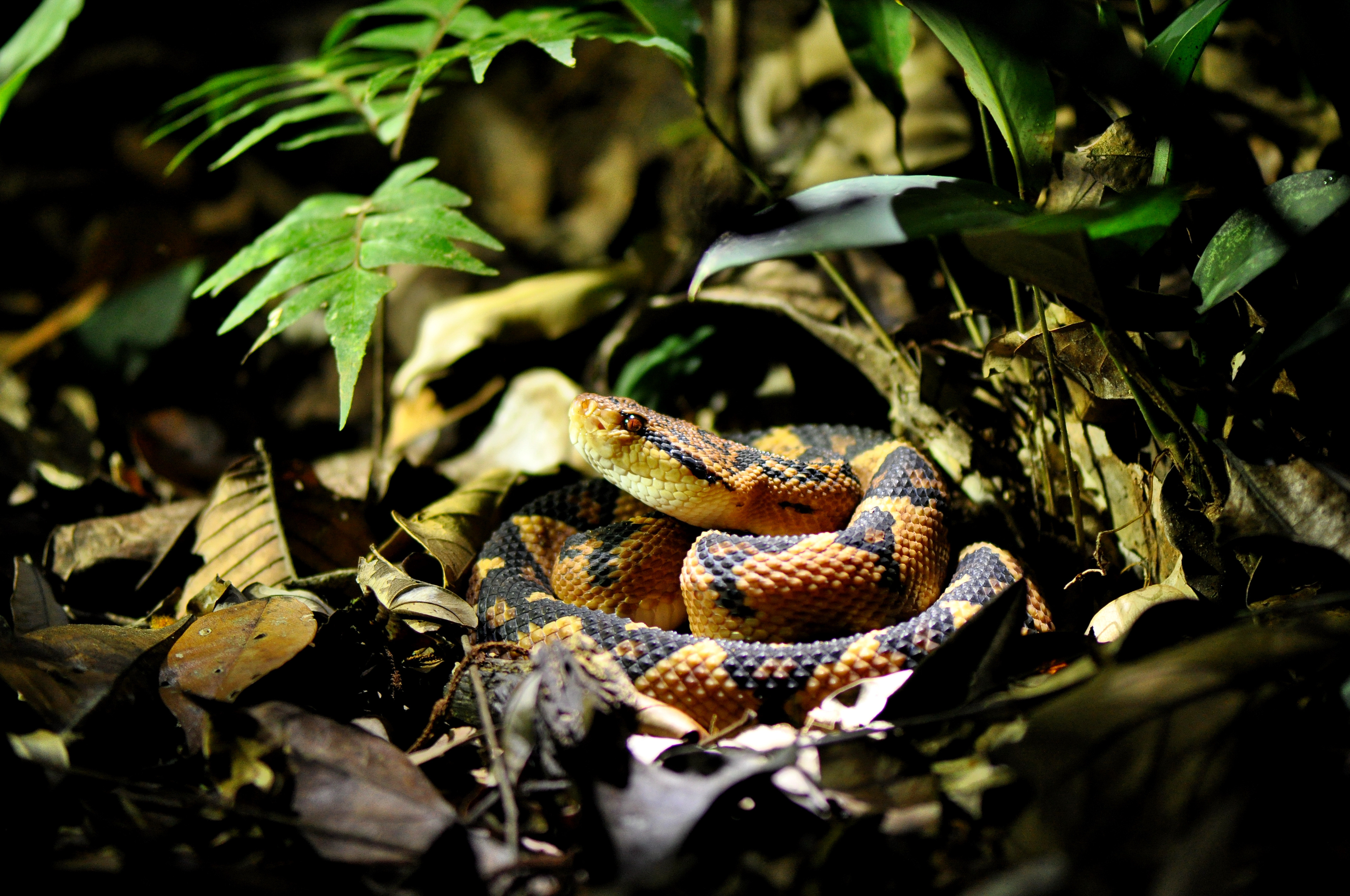 внутренних переработок, фото змей южной америки компания выступает
