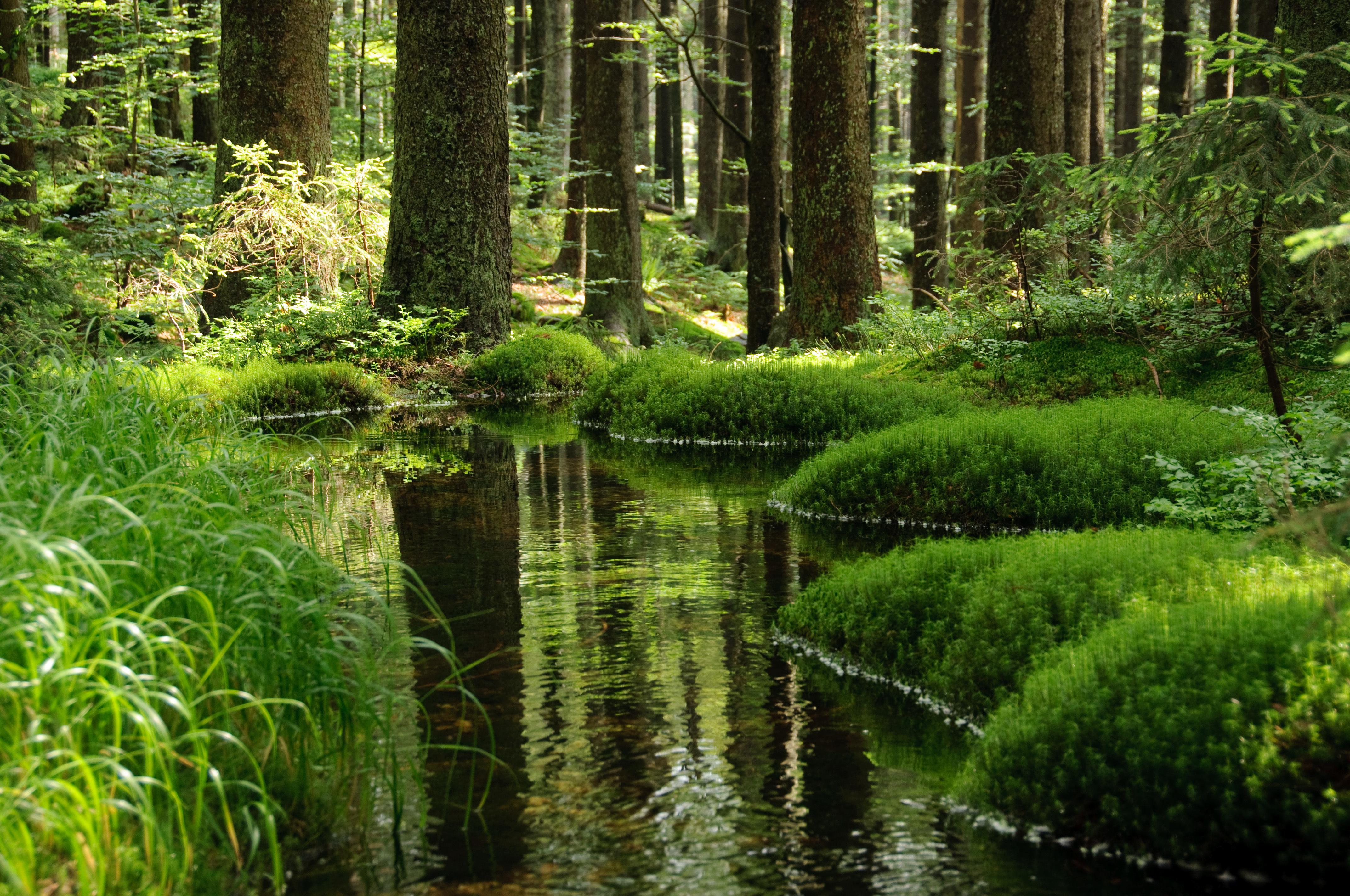 река лес  № 2789228 бесплатно