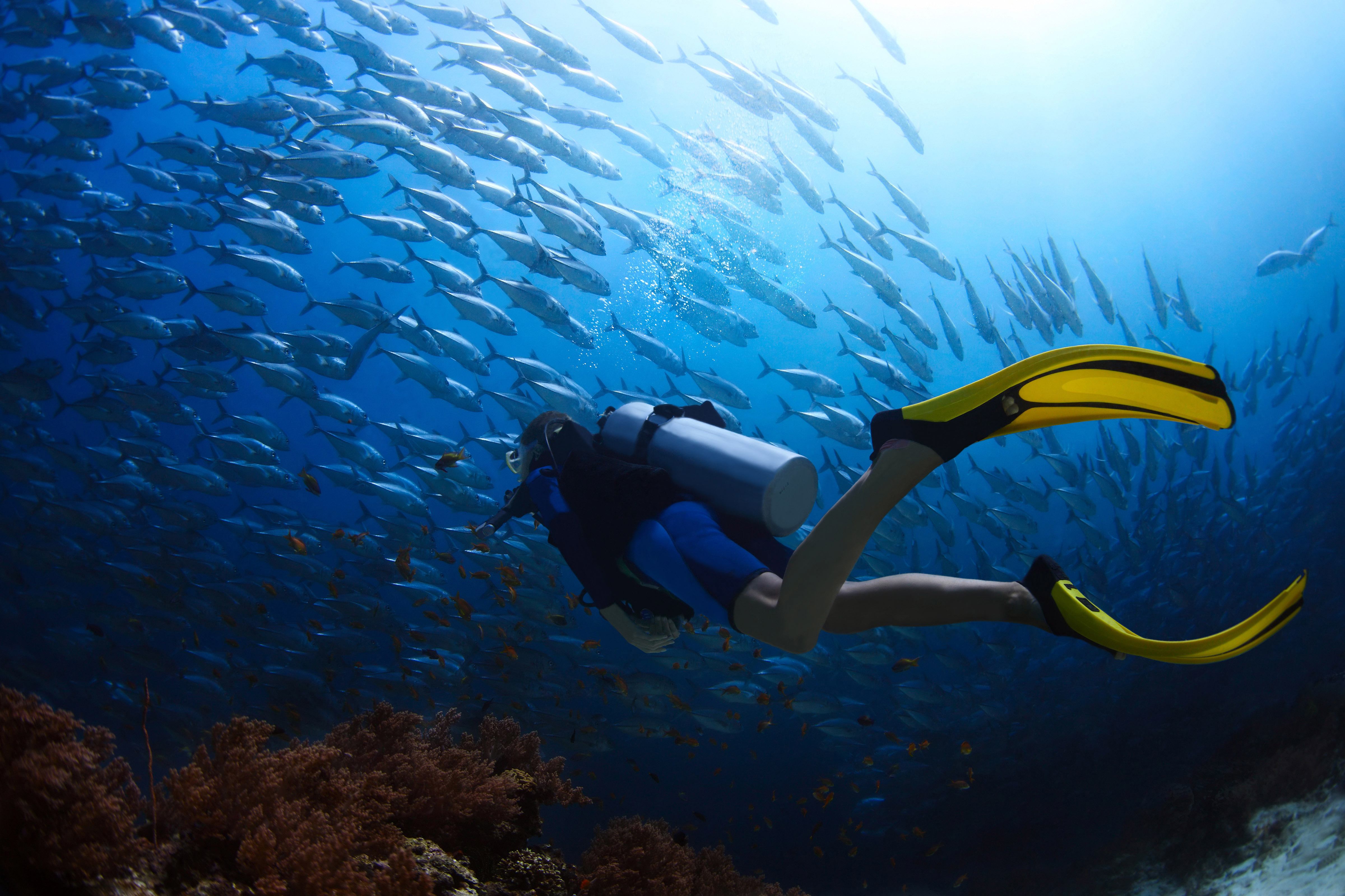 why human cant dive as deep as other diving animals