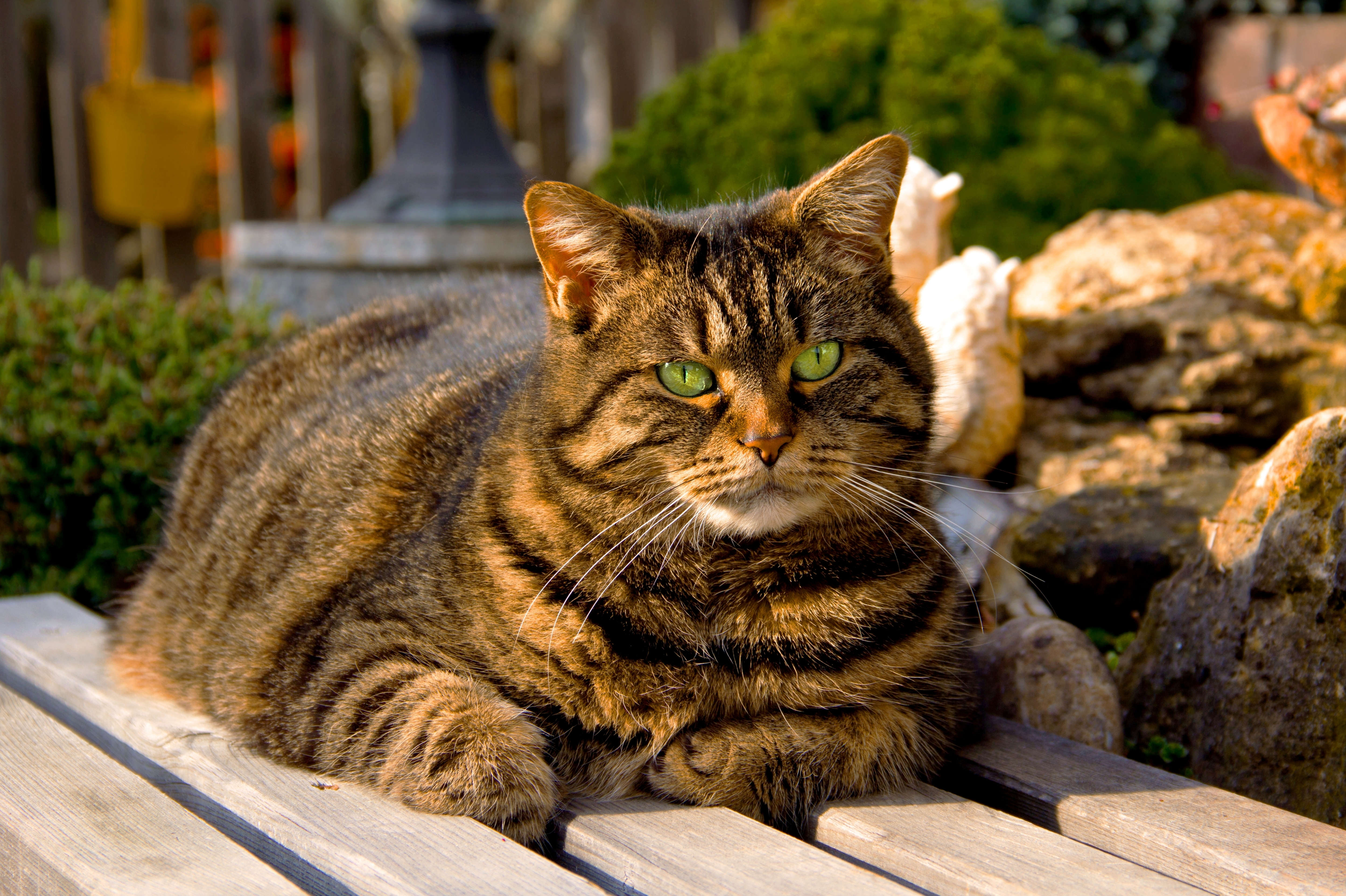 how long to treat a cat's uti