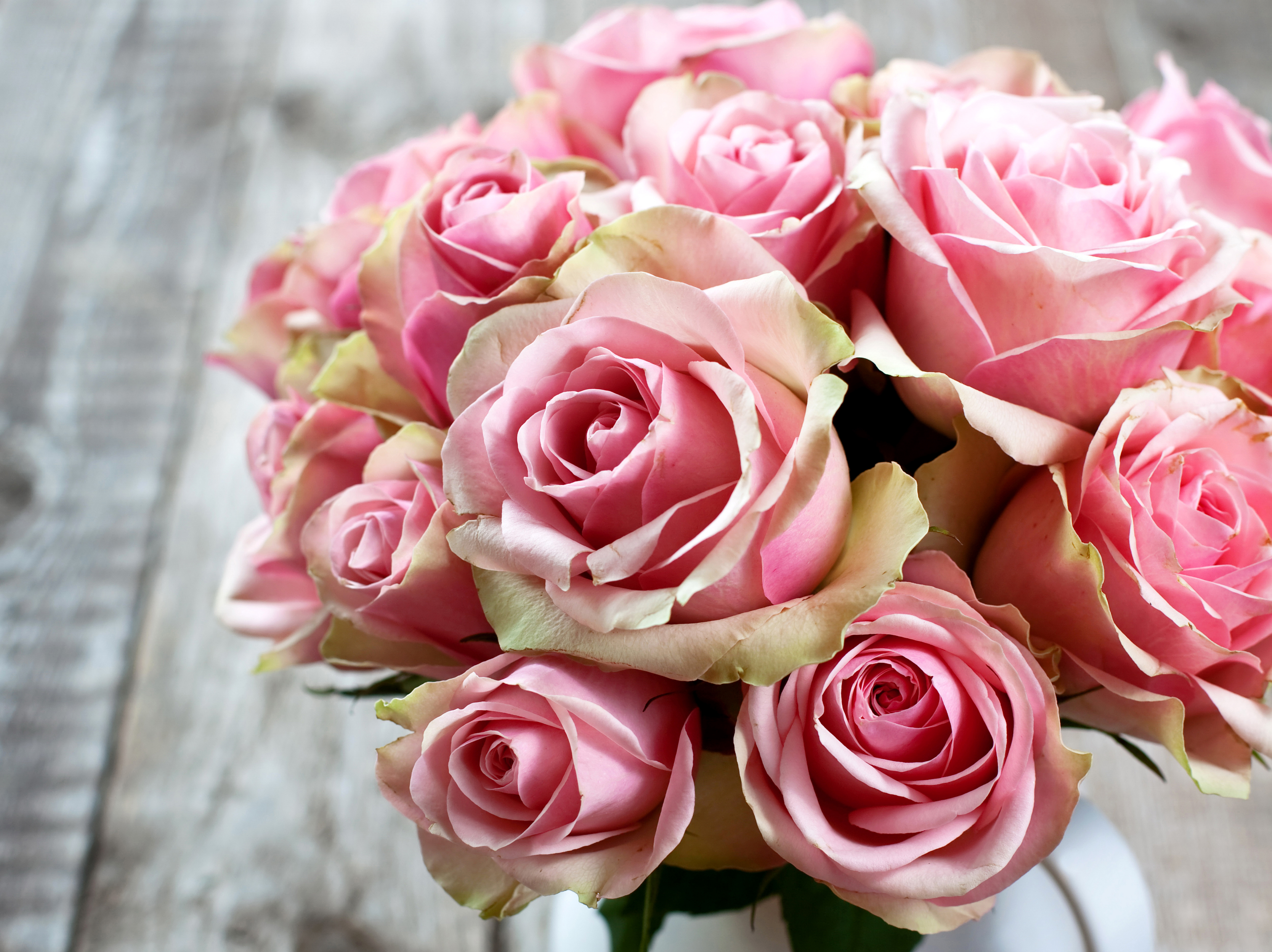 Send Roses Online Flower Delivery Buy Roses Rosefarm Pictures of pink rose bouquets