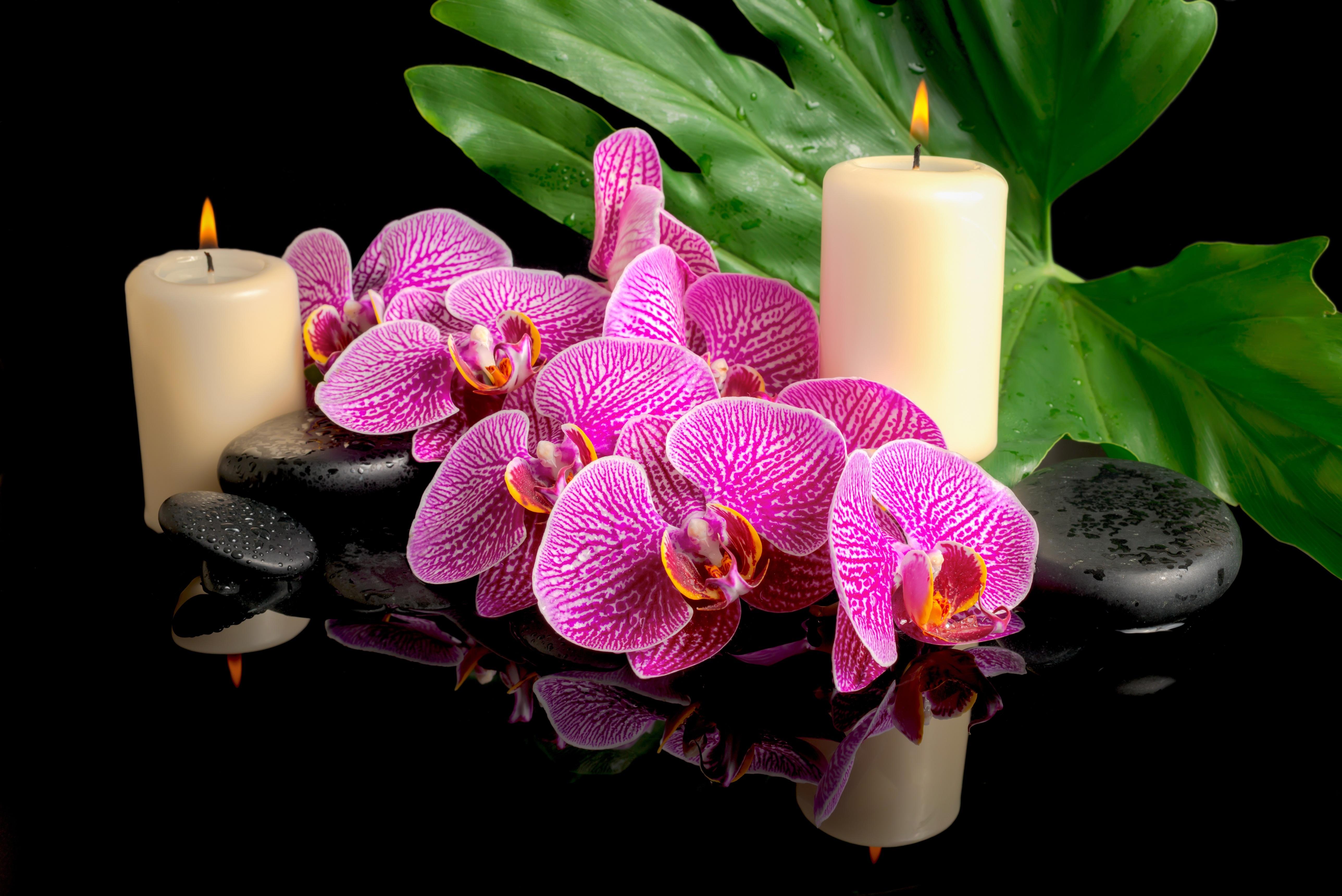 цветы свечи  № 1504398  скачать