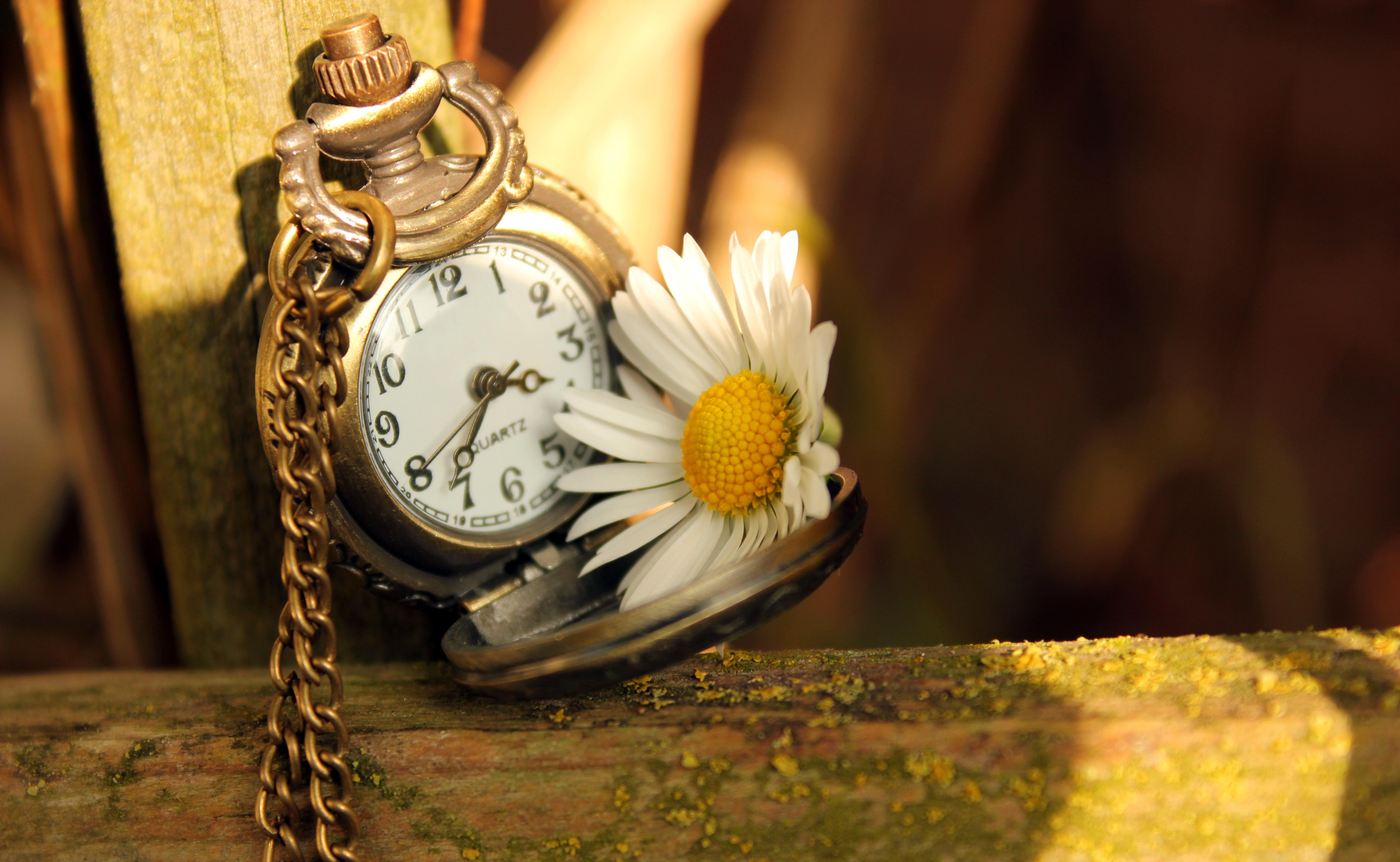 природа цветы часы  № 1520697 без смс