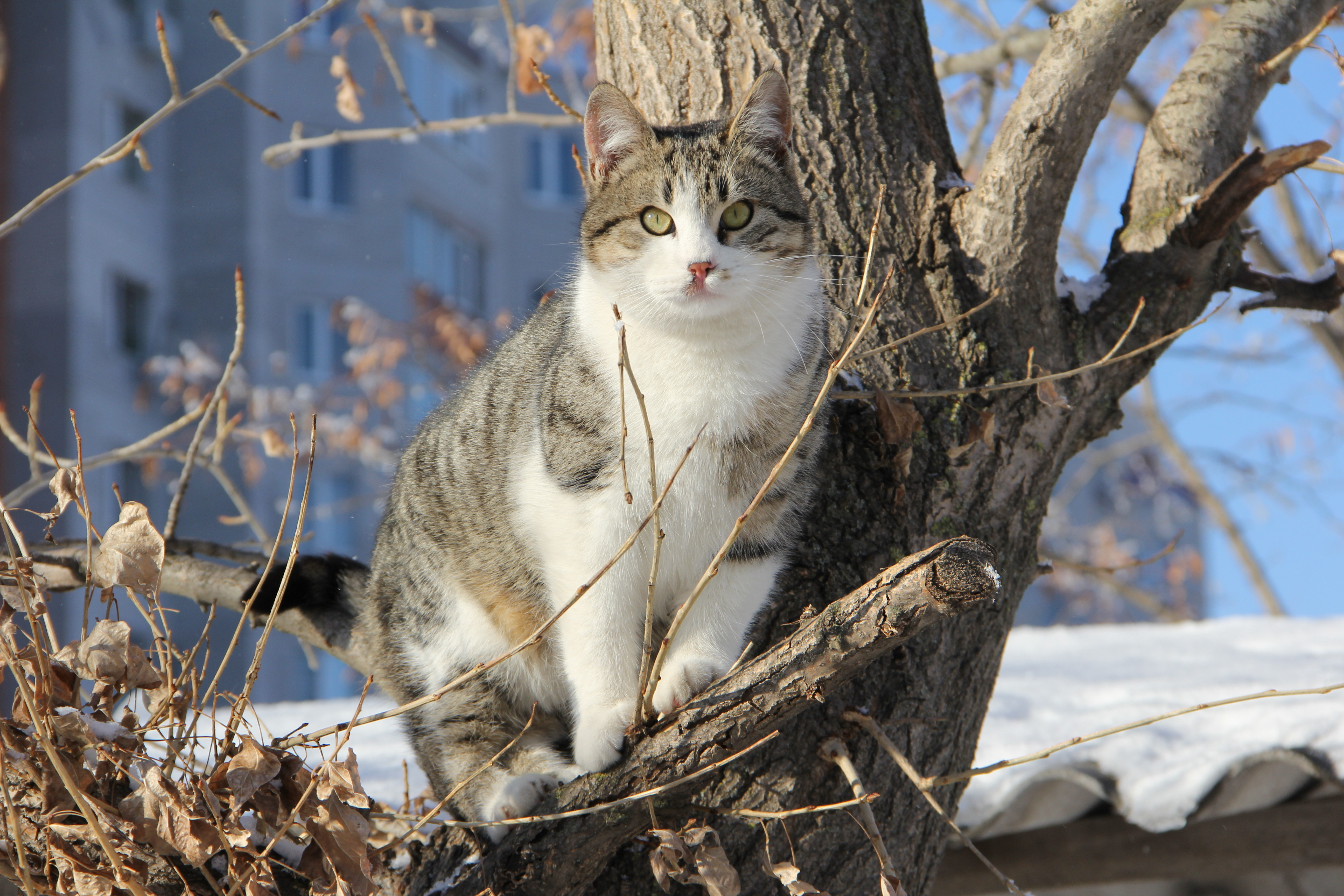 Кот на ветке  № 1118445 загрузить