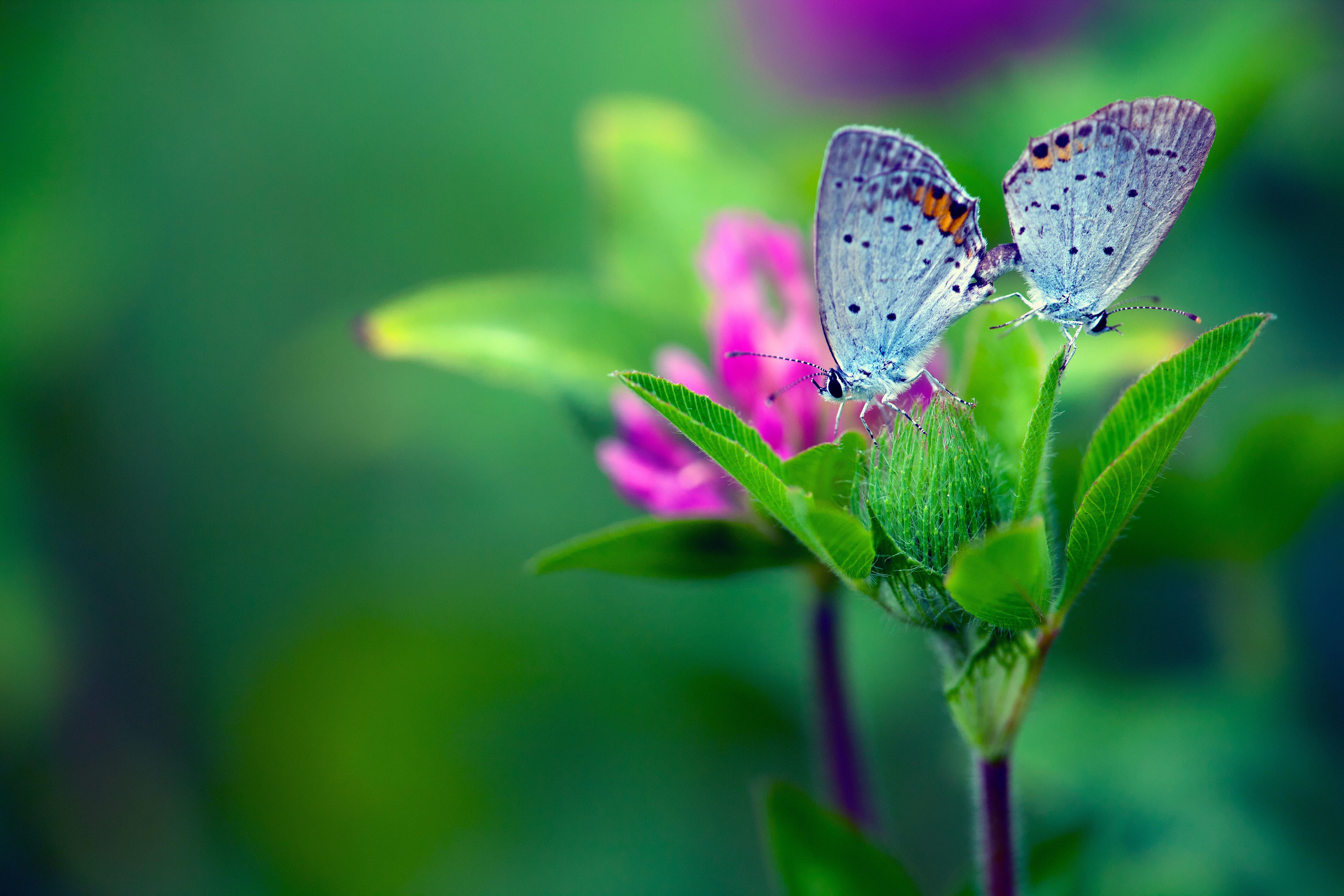 бабочка на зеленой траве  № 1396076  скачать