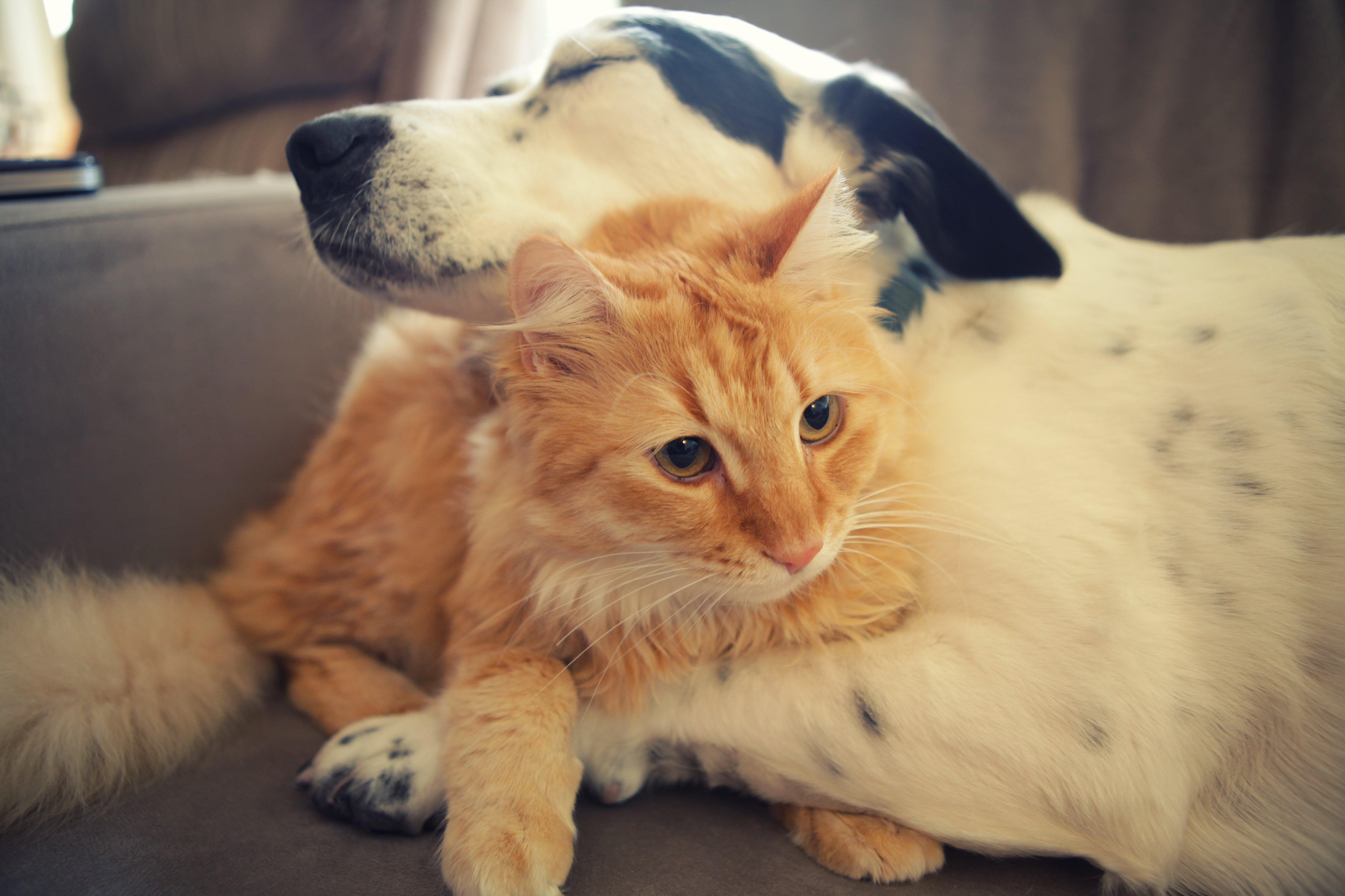 Watch the best dog and cat videos online and submit your own! Laugh cry and coo over these adorable pet videos from DogWorkcom