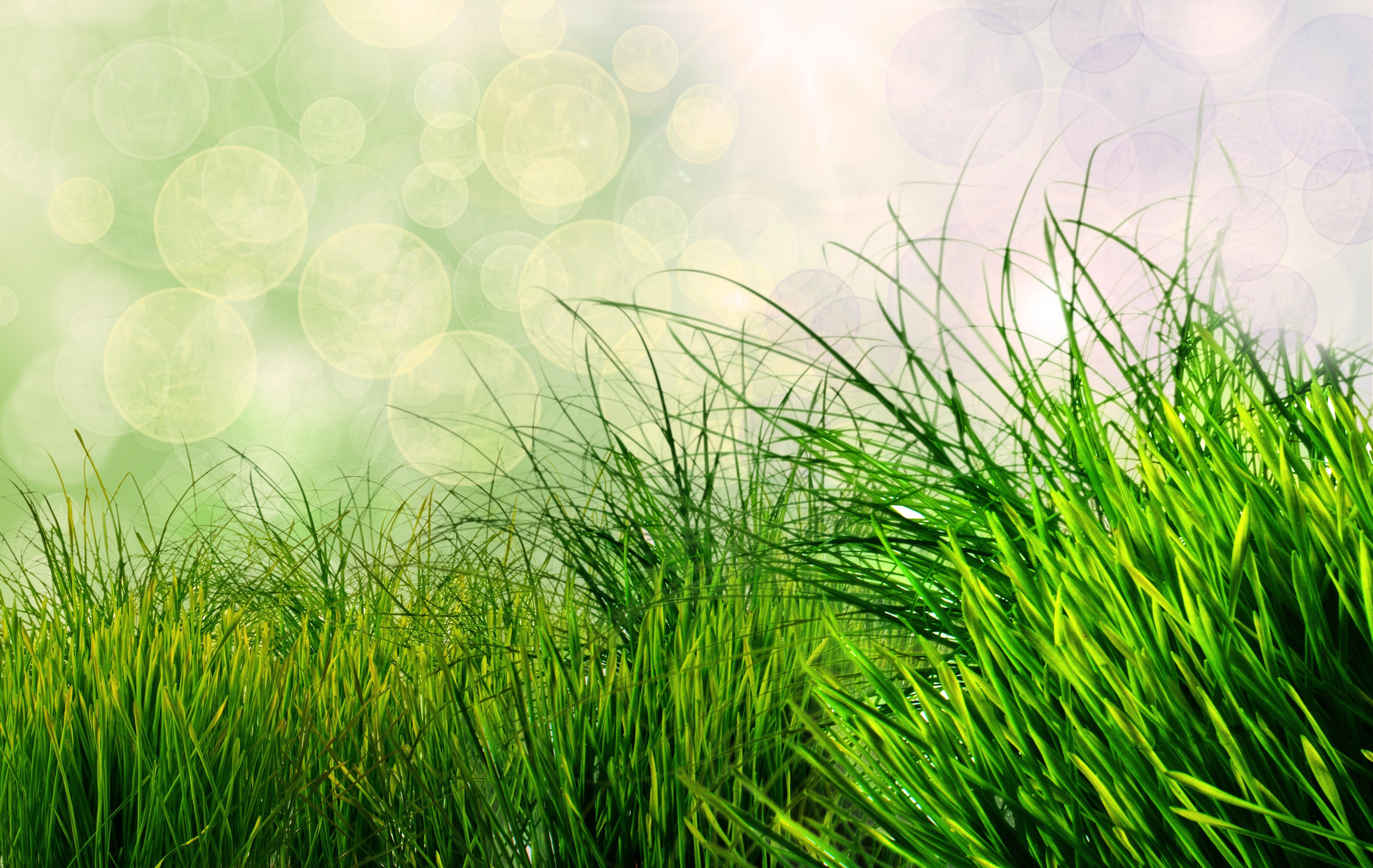 green grass background - HD1920×1214