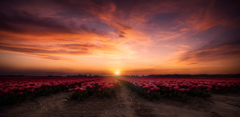 поле цветы рассвет field flowers dawn  № 3837091  скачать