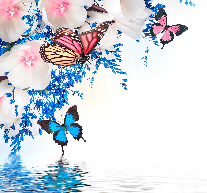 графика бабочки цветы вода graphics butterfly flowers water  № 1313432  скачать