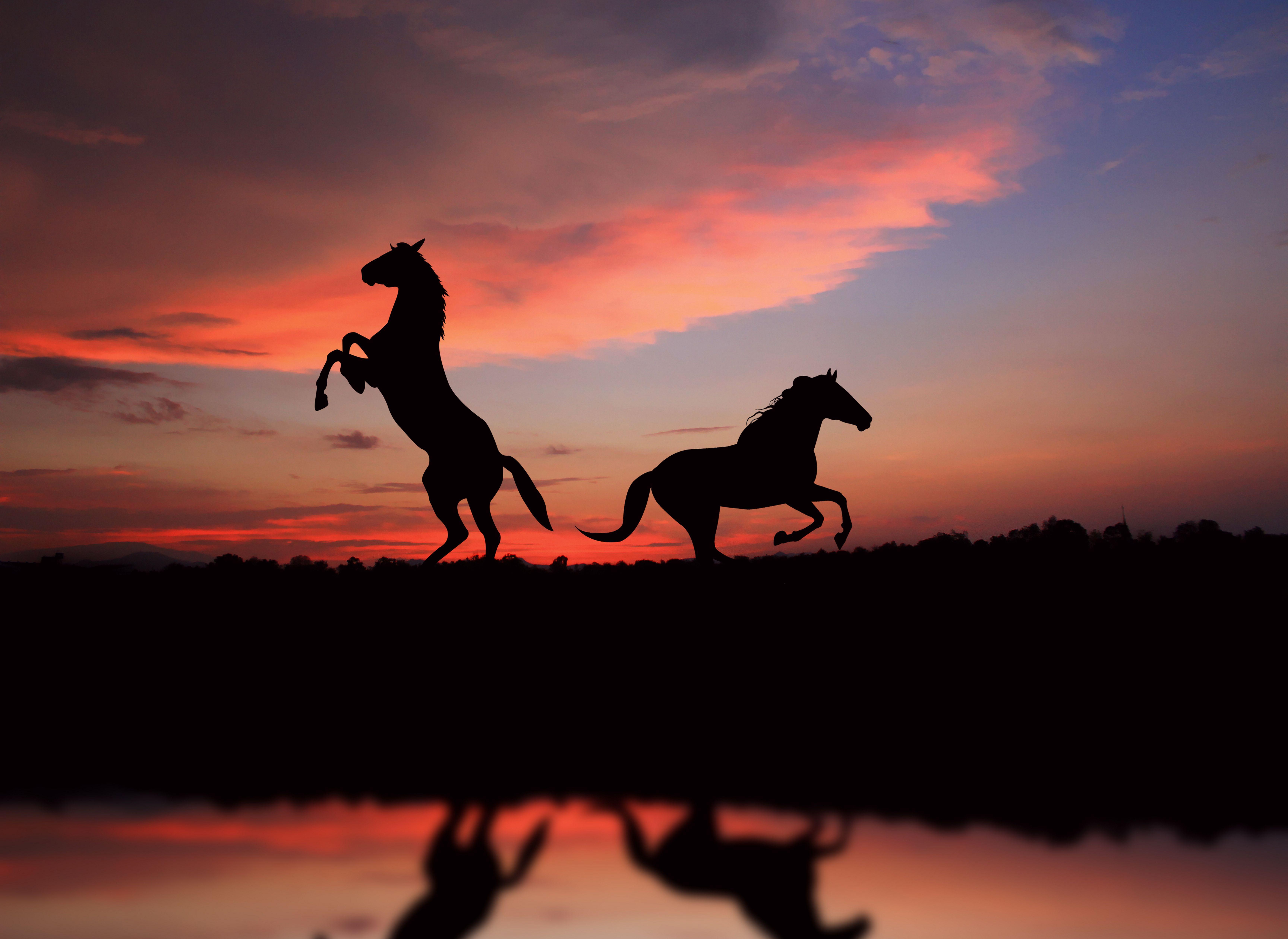 Обои на рабочий стол лошади на закате