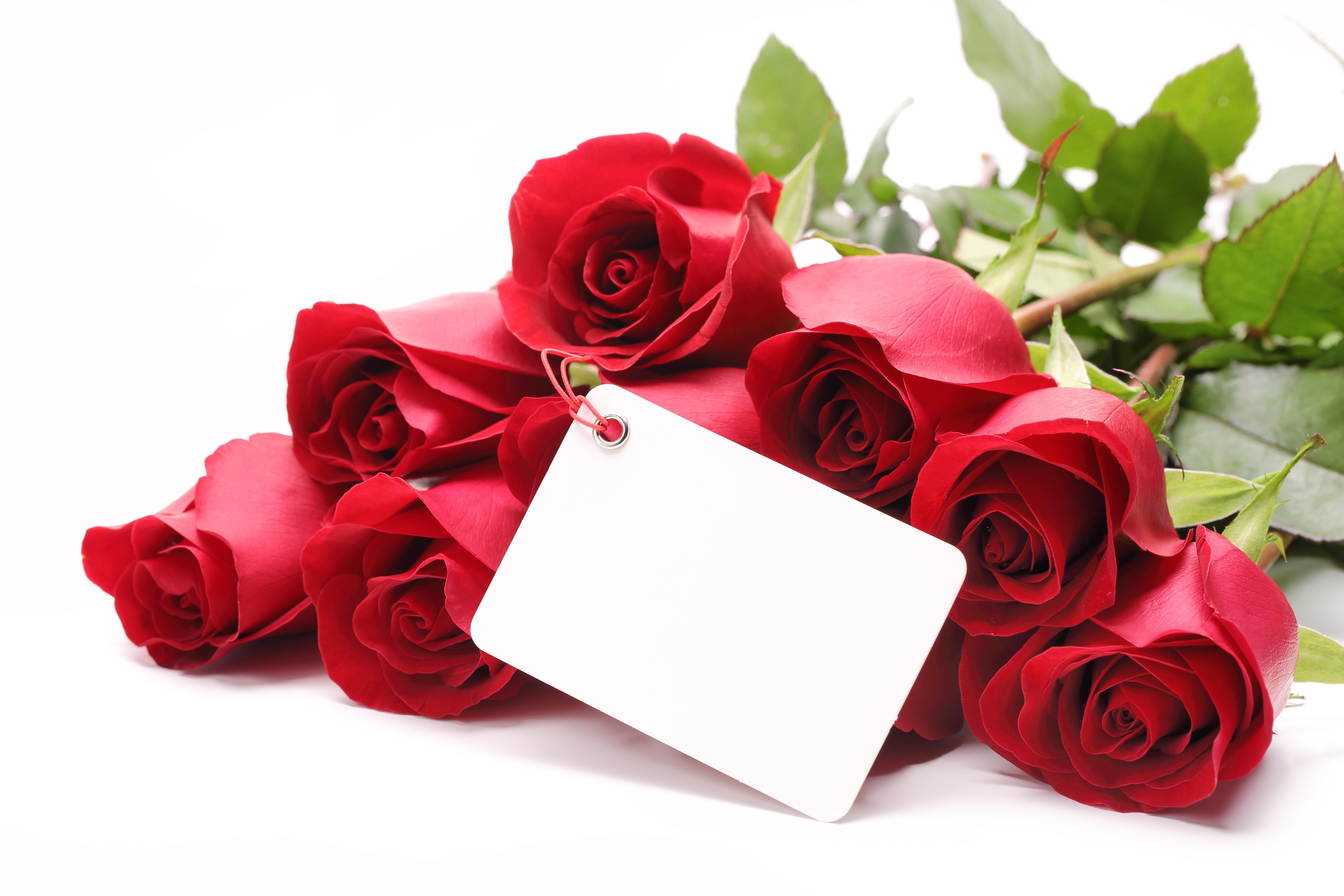 Победой спортивных, цветок роза на поздравительной открытке