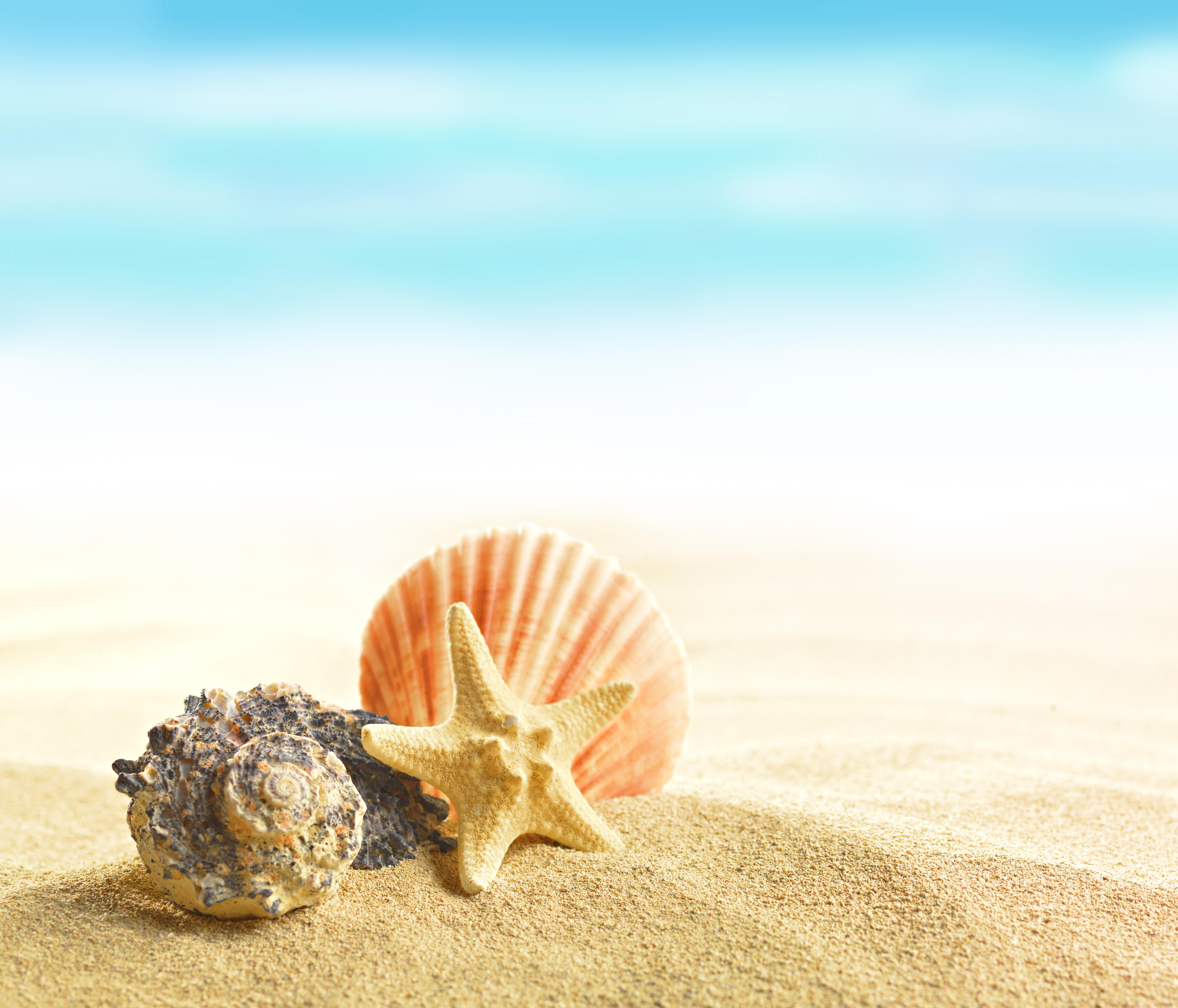 Download Wallpaper Summer Beach Sand Shells Seashells Section