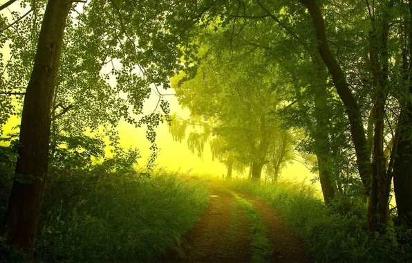 Picture road, forest, summer, trees, fog, morning