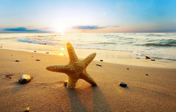 Picture sand, sea, beach, water, the sun, nature, river, stones, background, Wallpaper, wave, wallpaper, starfish, sea, …