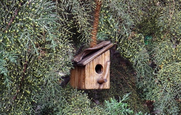 Picture TREE, HOUSE, NEEDLES, BRANCHES, BIRDHOUSE