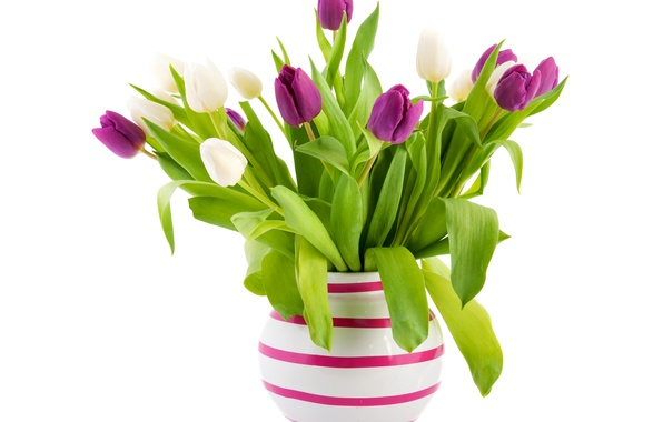 Picture leaves, bouquet, green, purple, tulips, white background, vase, white