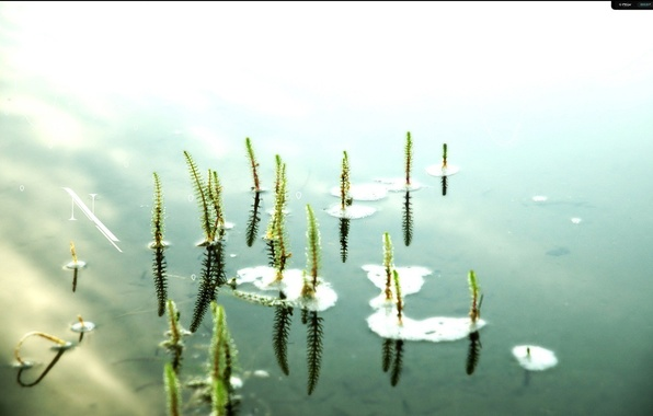Picture water, pond, loneliness, mood, Lily