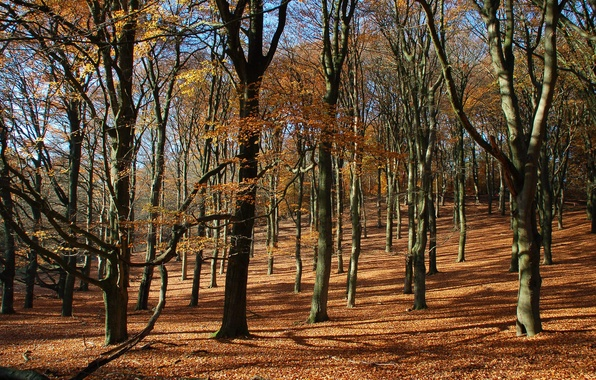Picture autumn, forest, leaves, trees, slope