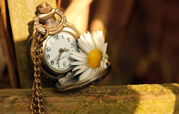 Picture flower, light, time, arrows, watch, Daisy, dial, chain