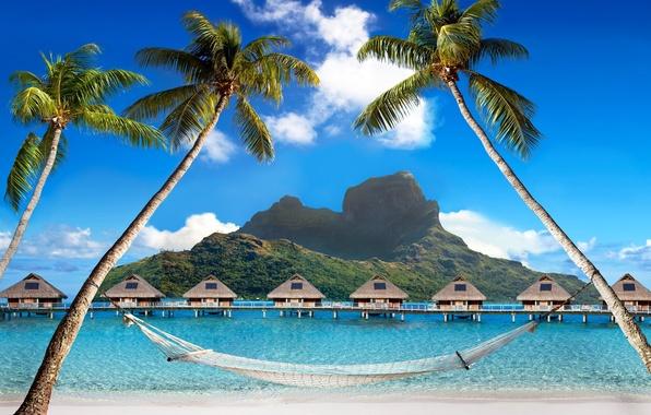 Picture sea, beach, tropics, palm trees, houses, summer, sunshine, beach, sea, ocean, paradise, vacation, palms, tropical, …