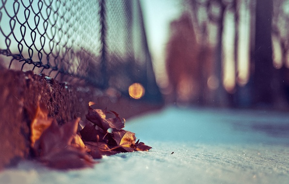 Picture leaves, macro, snow, photo, background, Wallpaper, blur, bokeh