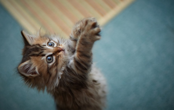 Picture kitty, the game, paws, fluffy, fur