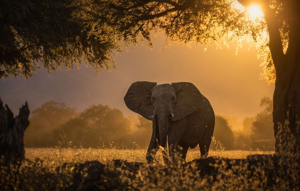Picture the sun, light, trees, tree, elephant