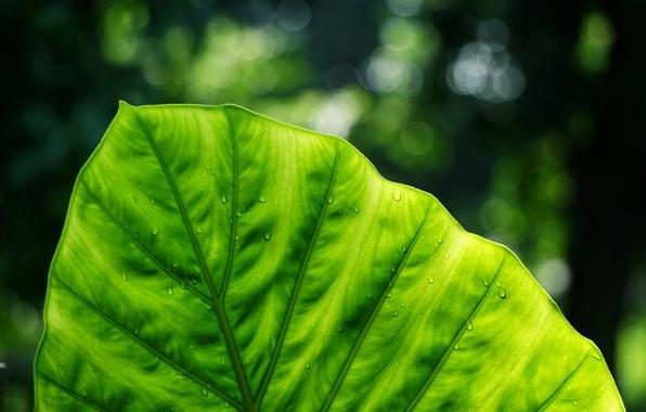 Picture macro, sheet, green, nature