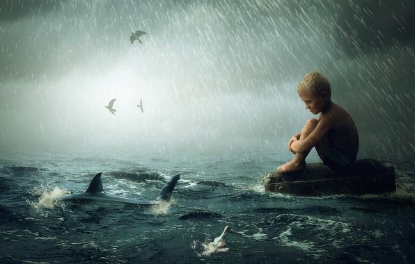 Picture wave, rain, shark, boy