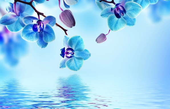 Picture water, flowers, flowering, Orchid, blue, water, flowers, beautiful, orchid, reflection