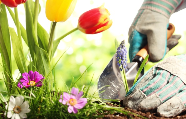 Picture earth, flowers, gloves