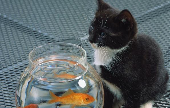 Picture cat, white, cat, kitty, black, aquarium, fish, cat