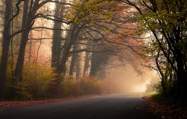 Picture road, autumn, forest, leaves, trees, fog, foliage