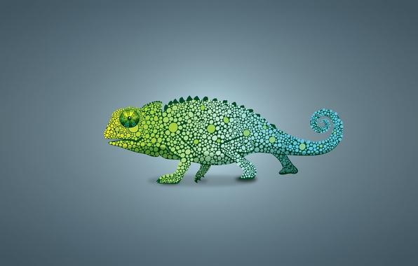 Picture green, chameleon, lizard, light background, chameleon