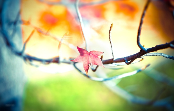 Picture color, trees, joy, branches, heat, photo, tree, mood, foliage, leaf, focus, blur, positive, branch, leaves, …