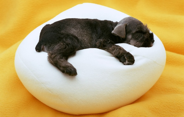Picture sleep, dog, baby, puppy, pillow