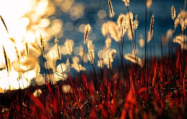 Picture nature, plant, Lake Kasumigaura, Brightness of Light