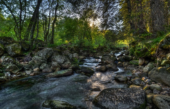 Picture forest, trees, stones, Norway, river, Norway