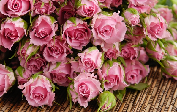 Picture flowers, roses, bouquet, petals, pink, buds, Mat
