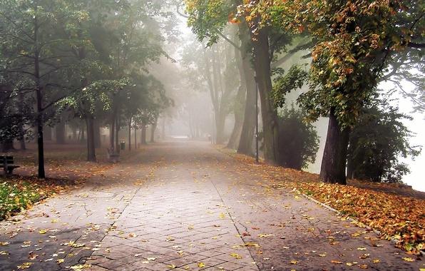 Picture autumn, leaves, fog, Park