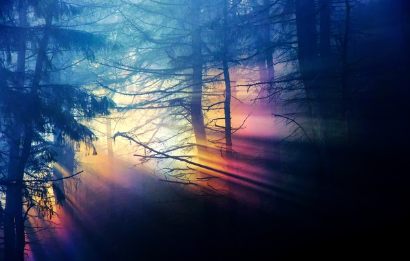 Picture forest, light, trees, branches, nature, darkness, rainbow, range, dense
