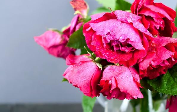 Photo wallpaper macro, roses, bouquet