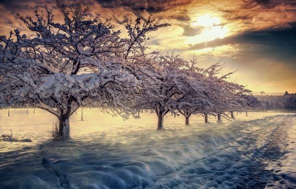 Picture winter, the sky, clouds, snow, landscape, nature, sunrise