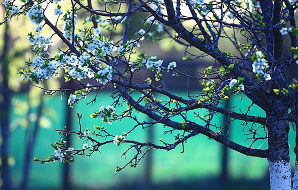 Picture branches, tree, spring, flowering, flowers, bokeh